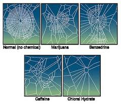 Spiders given Psychoactive Drugs