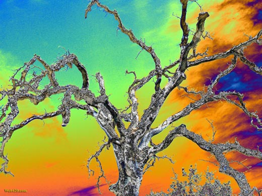 Psychedelic wallpaper of an Oak tree